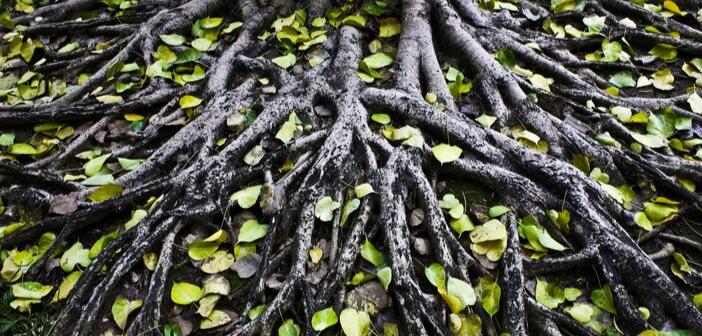QuestGates creates arboricultural liability hub