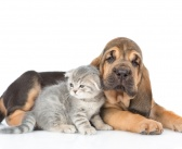 Pet insurers pay out a record £706 million in claims in 2016