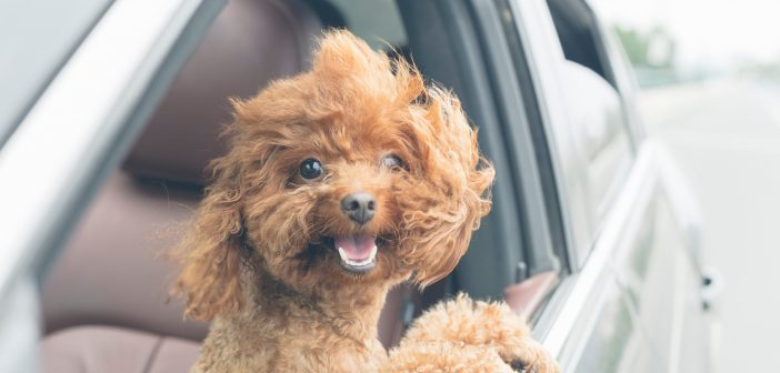 MoneySuperMarket warns pet owners at risk of voiding car insurance