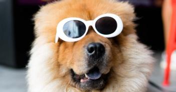 Vet-AI and FirstVet strengthen insurtech in pet insurance
