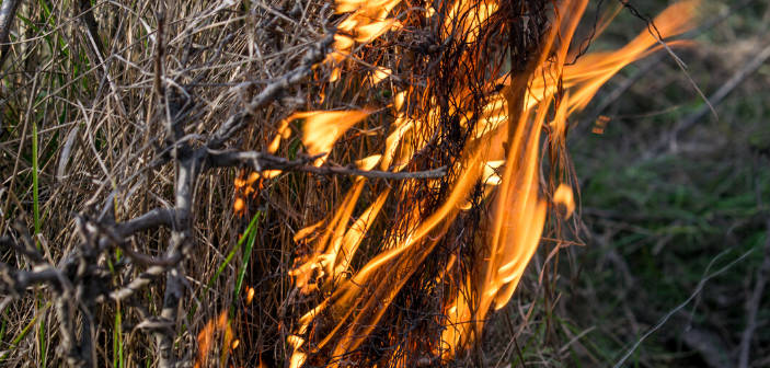 Australia bushfires continue to burn as claims spike