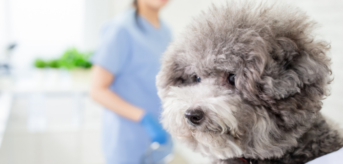 Agria Pet Insurance chooses DWF 360's EvoClaim to support growth